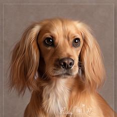 Dog portrait photo sessions Crowborough