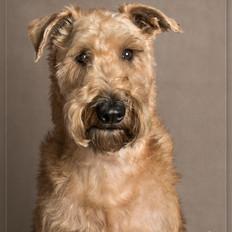 Dog photography Uckfield