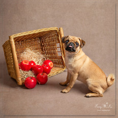 Dog portrait photography Tunbridge Wells