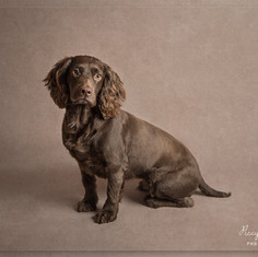 Dog portrait photography
