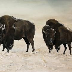 Buffalo+in+the+Snow.jpg