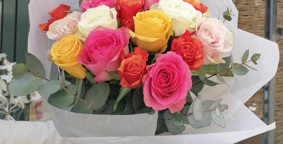 Rose primavera