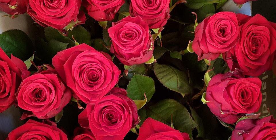 Rose extra