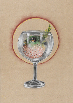 VIII - Gin-tetraodontidae