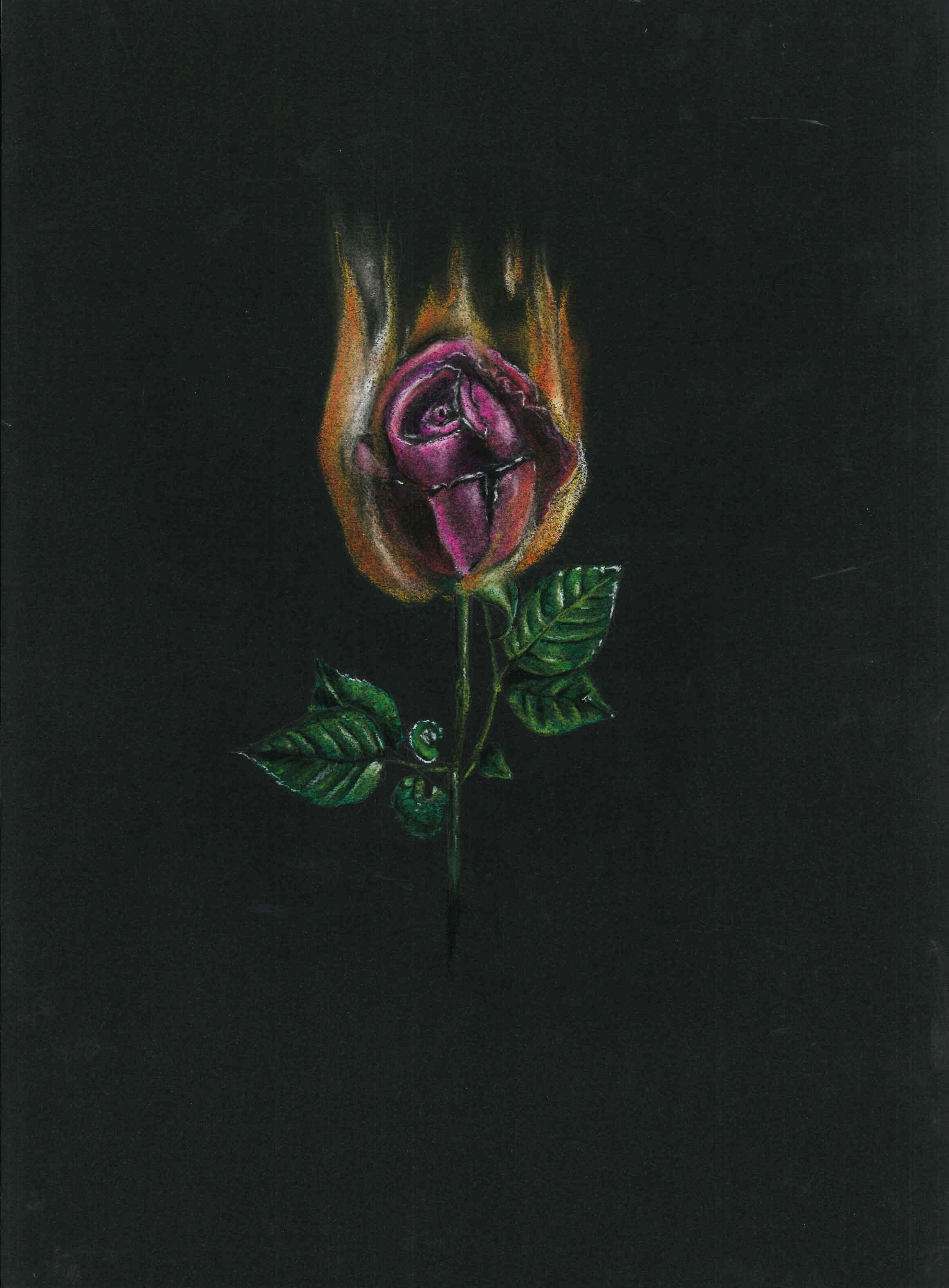 rosa-ardiendo