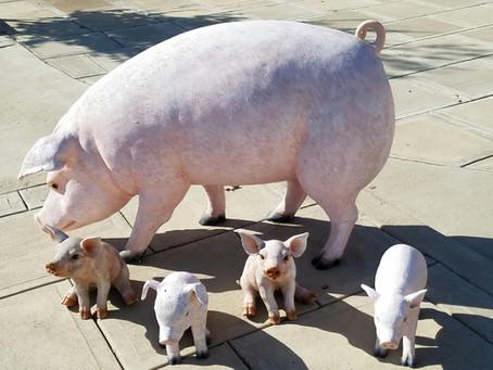 """We heard echoes of the Arkansas Hog Call """"Woooooooo Pig Sooie"""""""