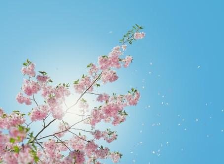 Live Joyfully Everyday – Whatever the Weather