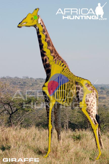 afterimage_14467 giraffe.jpg