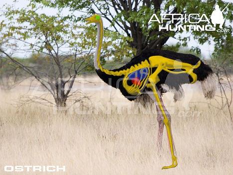 ostrich_shot_placement.jpg