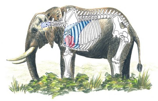 elephant-diagram.jpg
