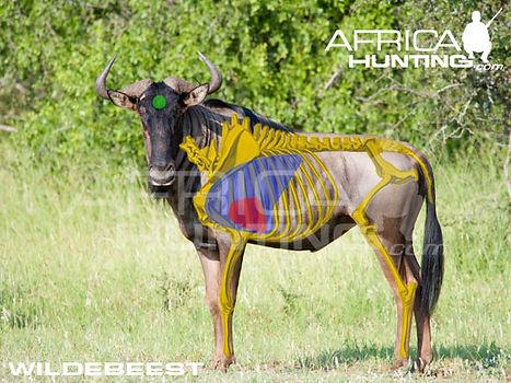 wildebeest_shot_placement.jpg
