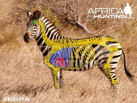 huntingatrophyzebra_2.jpg