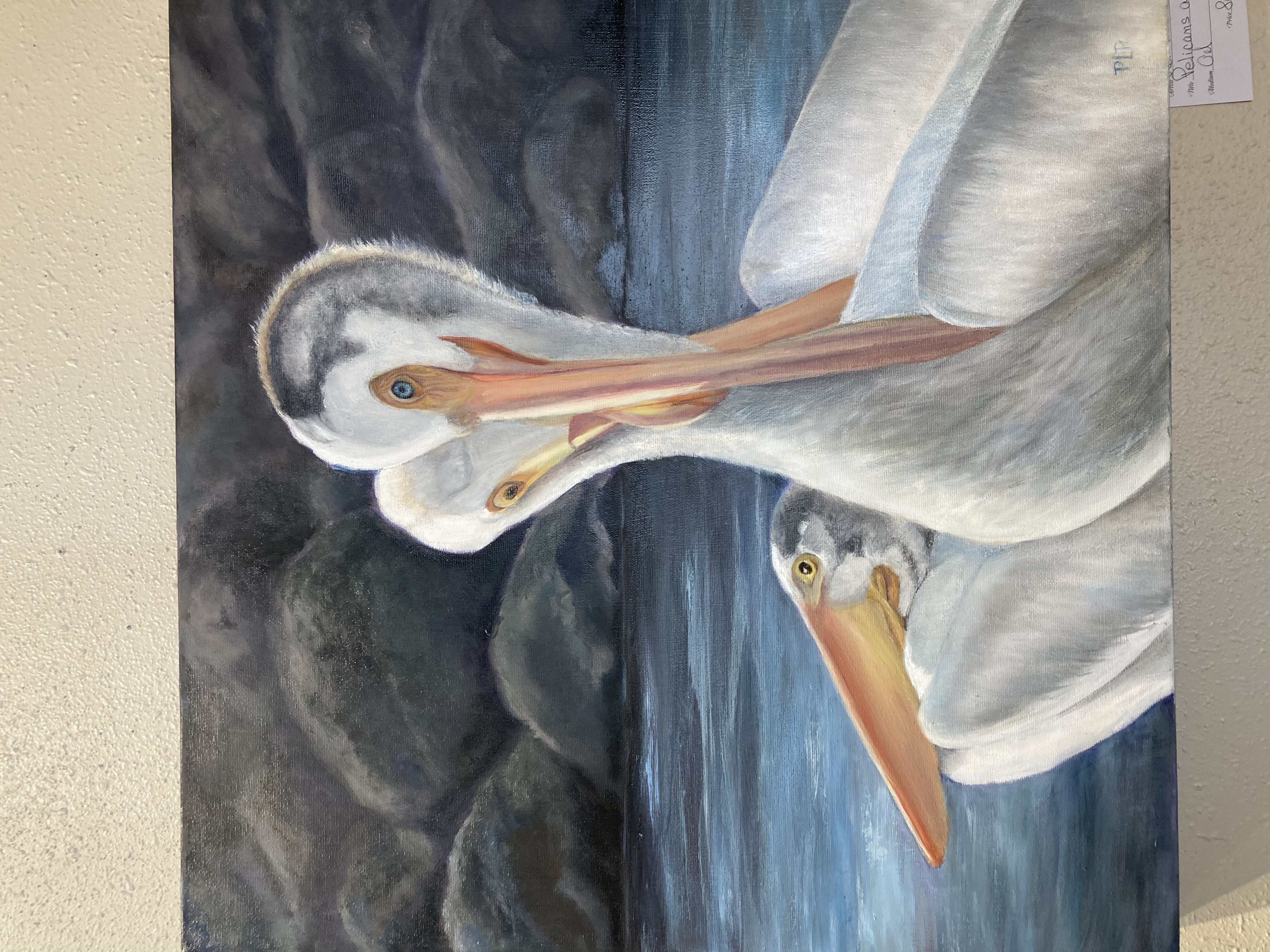 Pelicans Are We