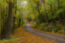 thumbnail_Forest Road Vermont - photogra