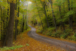 Forest Road Vermont
