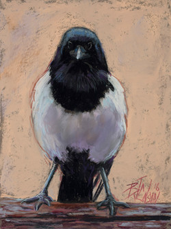 The Crabby magpie