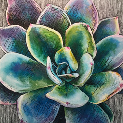 Succulent -  Purple and Green