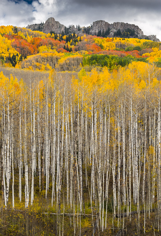 Reaching Aspens