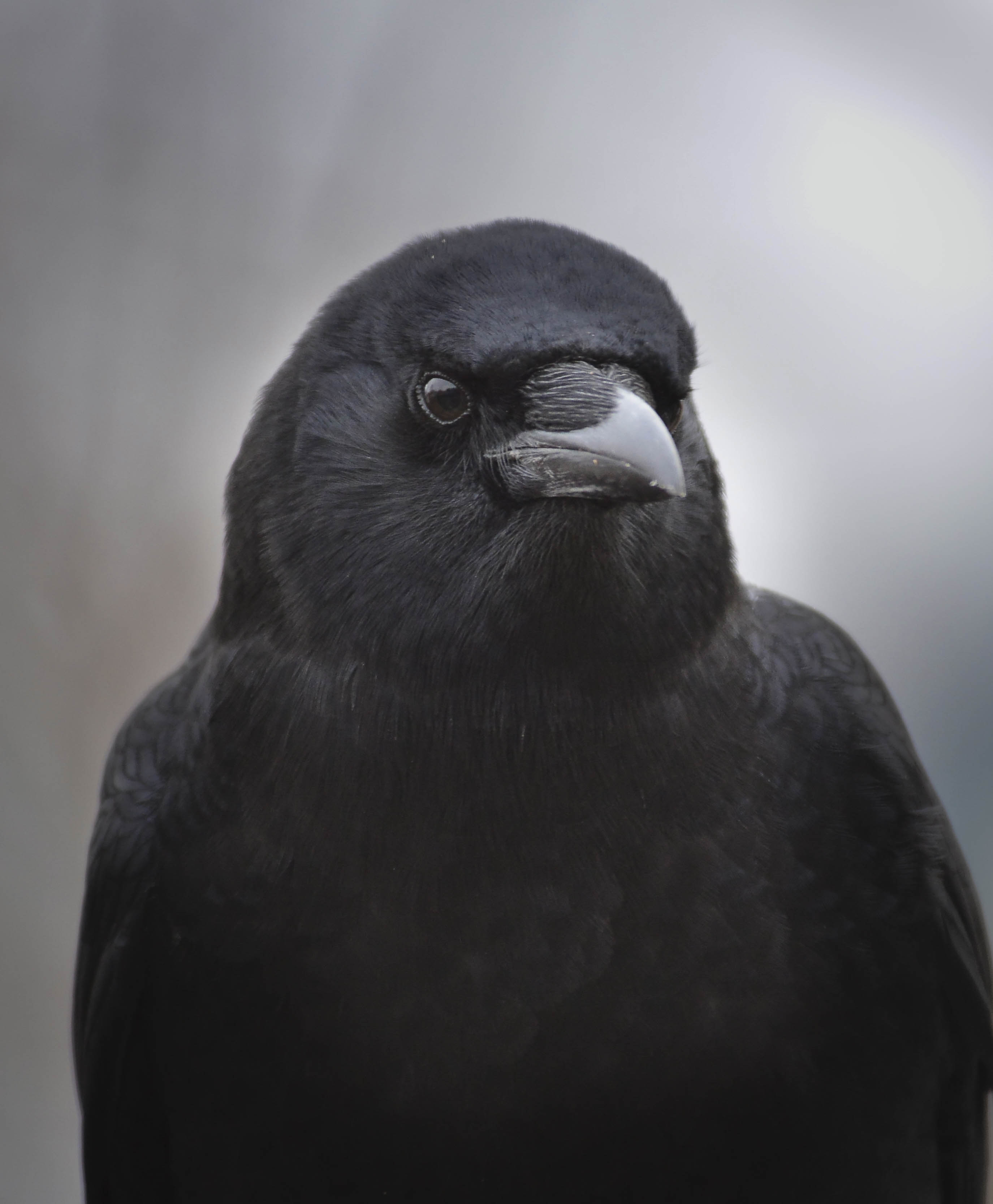 Portrait of Mother Crow