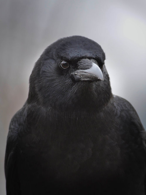 Portrait of Mother Crow
