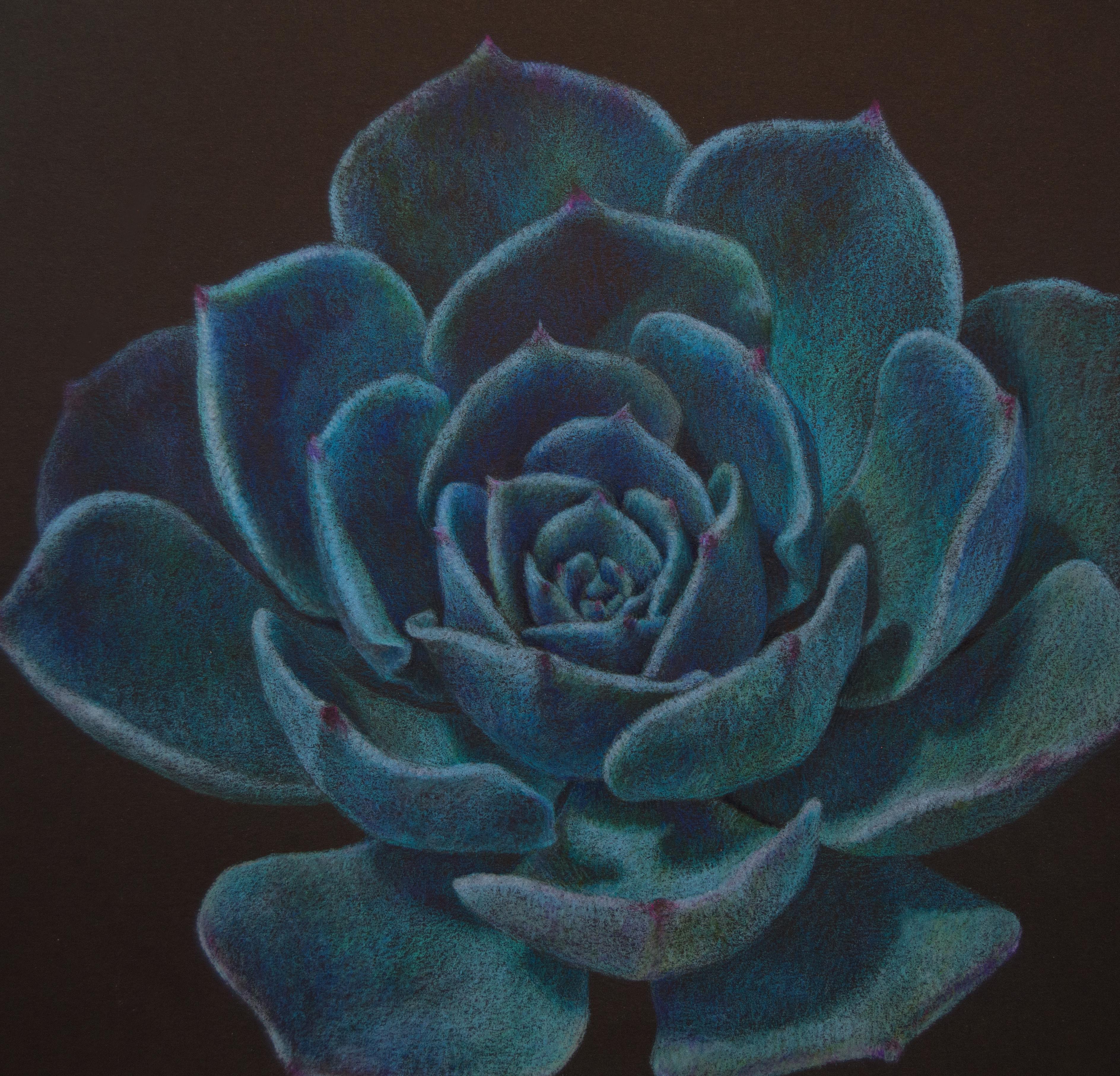 Bright Blue Succulent