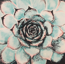 Succulent -  Pink and Green