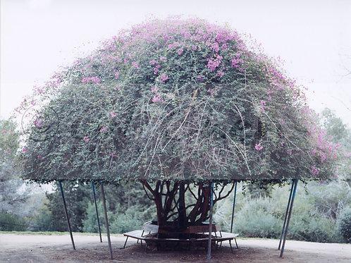 Boogenvilia Mushroom