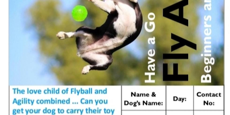 Fly Agility Course