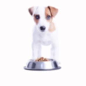 Puppy Having Lunch_edited.jpg