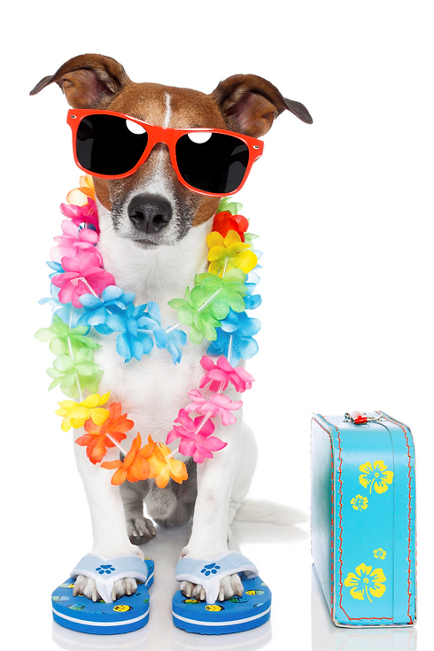 holiday dog.png