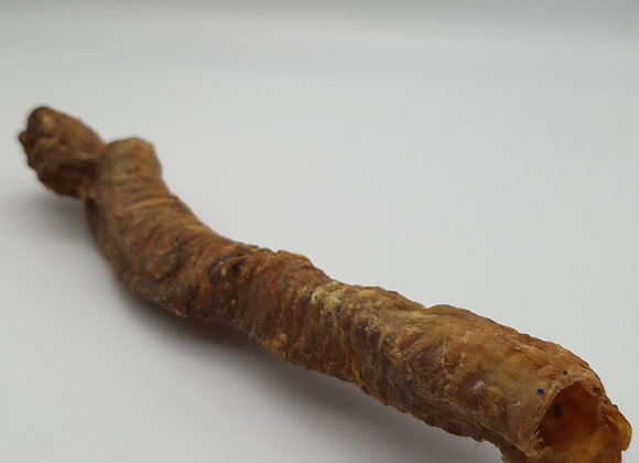 Lamb trachea