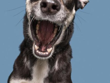 Antipulgas: Pro bem do seu Pet e também da sua casa!