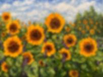 Sunflower Field - commission.jpg