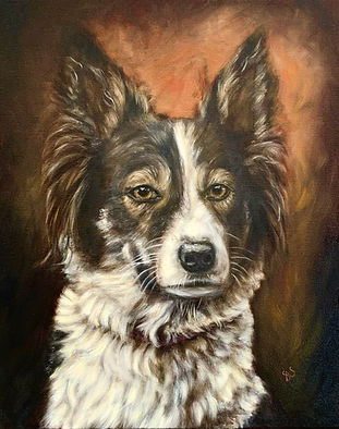Bonnie, collie dog