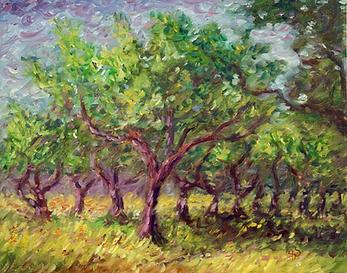 Olive Trees.HEIC