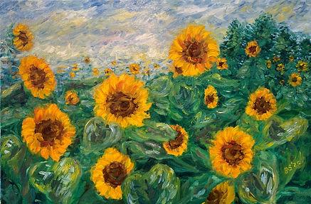 Sunflower Field (2).jpg
