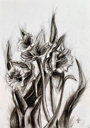 Daffodil sketch.jpg