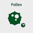 8-Pollen.png