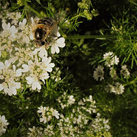 June_2010 015b.jpg