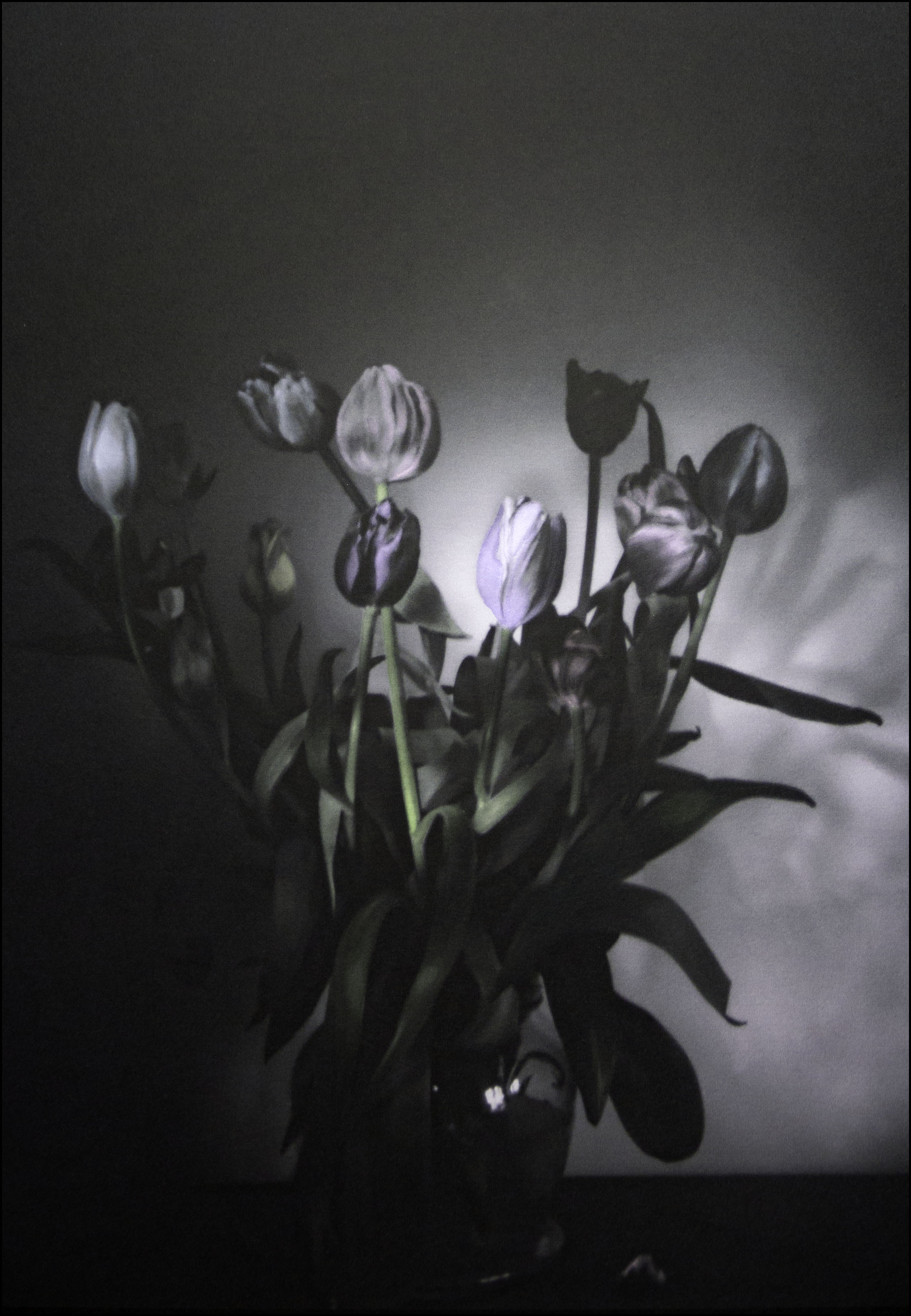TULIPS WITH LOVE HAND PAINTED FILM