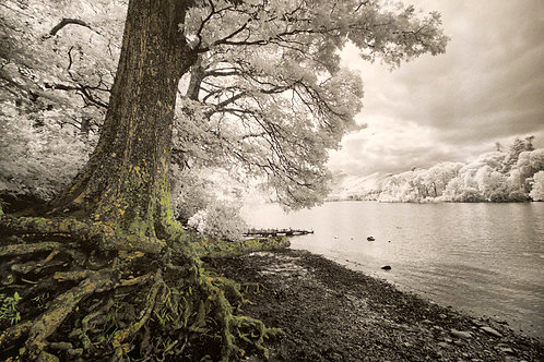 ROOTS, CONISTON WATER, THE LAKES