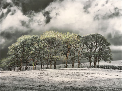 DANBY CLUMPS, NORTH YORKSHIRE