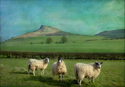 THREE SWALEDALES ROSEBERRY TOPPING