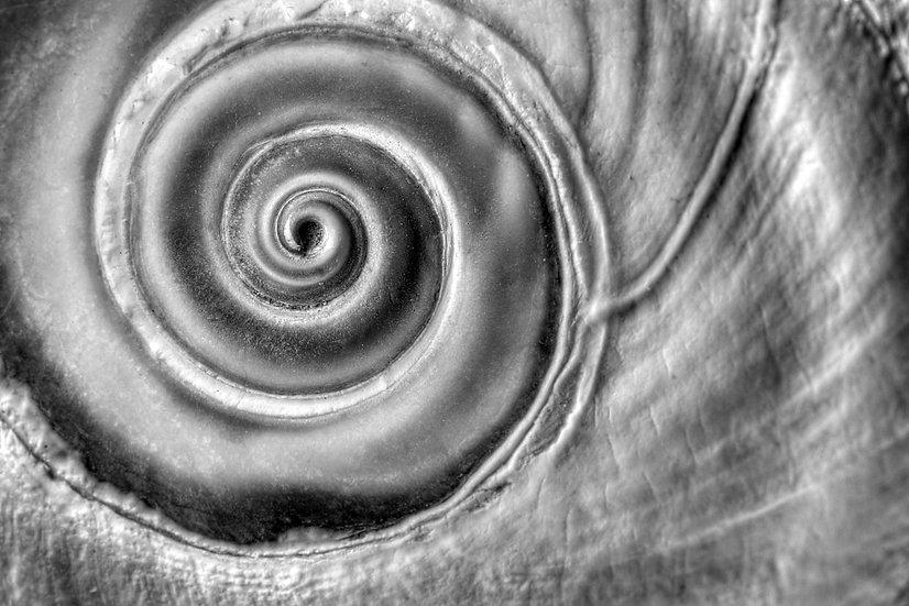 Moon Shell Spiral