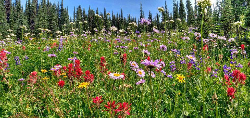 Alpine Glory