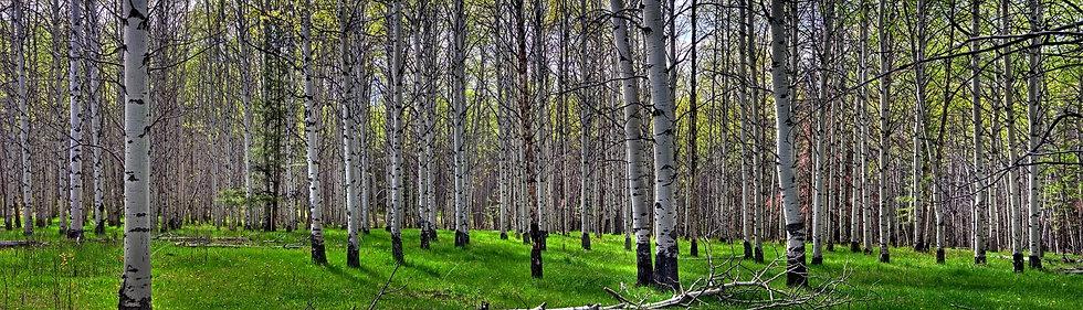 Poplar Meadow