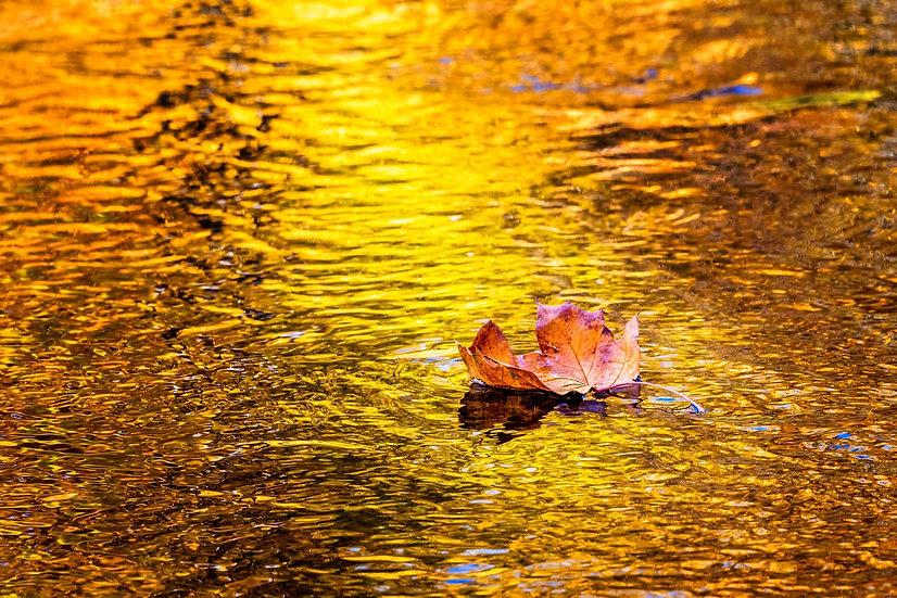 Golden Rays 2