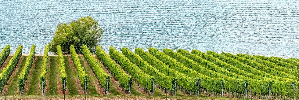 Vines & Water