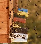bee-colonies-4027005_1920.jpg