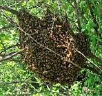 Swarm prevention.jpg